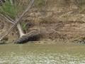Tensaw_River0000032
