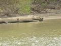 Tensaw_River0000033