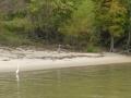 Tensaw_River0000036