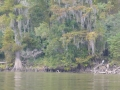 Tensaw_River0000044