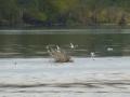 Tensaw_River0000046