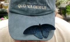 macinac-butterfly